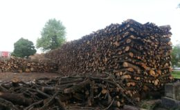 industria boschiva (1)