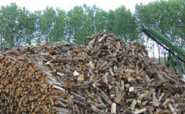 industria boschiva (2)