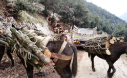 industria boschiva (3)